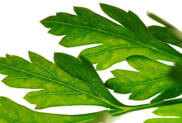 Green leaves 'walking' across your screen