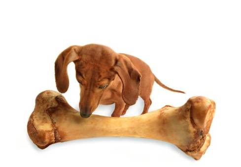 A dog staring at the biggest bone he's ever seen.