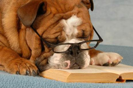 A dog with glasses reading a book.